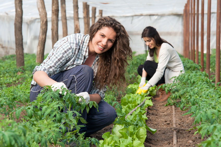 Lehká manuální práce pro ženy – pouze ranní směna